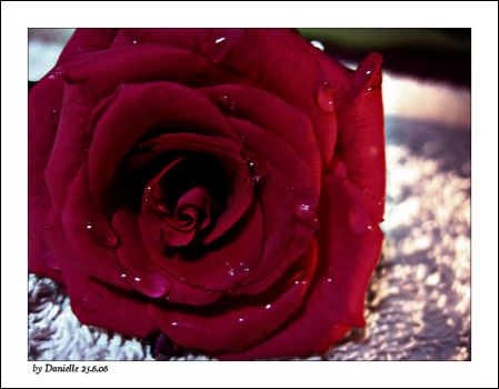 red rose.. by danielle1000