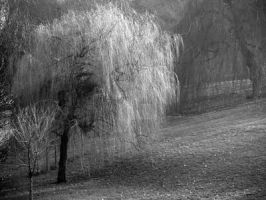Beneath a weeping willow tree by Morgan-Lou
