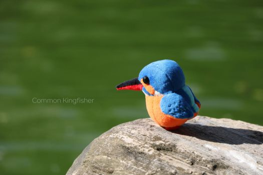 common kingfisher ,plush by icecream80810