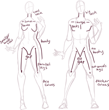 Male vs Female anatomy by Xylerz