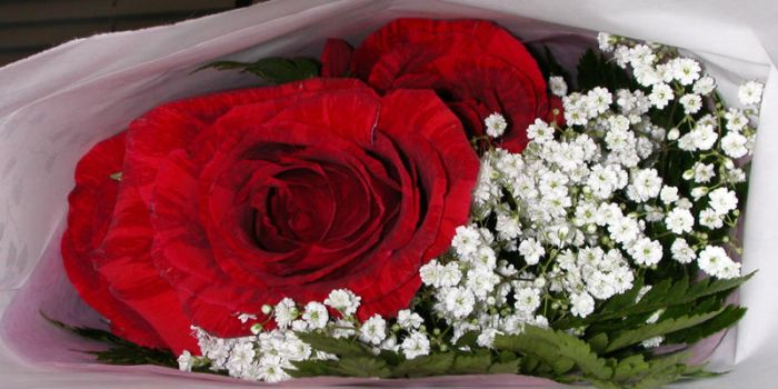 red roses red roses by gusterlover6