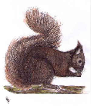 red squirrel by Hannah-Buck