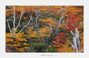 Autumn in Patagonia by alexandre-deschaumes