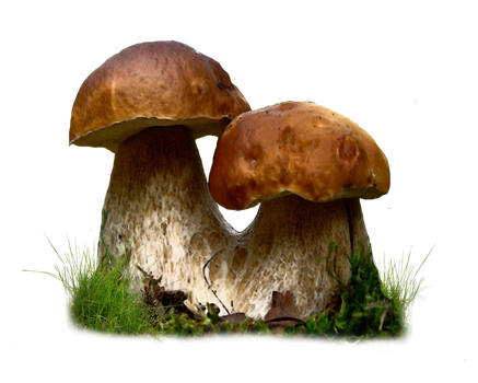 Mushroom Png by Moonglowlilly