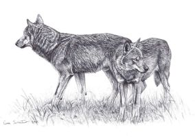 Italian Wolves couple by makangeni