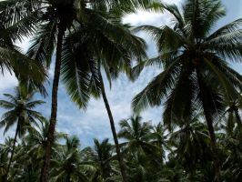 Palm trees in Palolem by Thepeopleszero