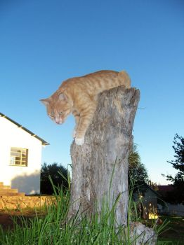 Cat On Stump by Scrattii
