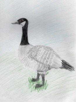 Canadian Goose by Werepyre-Queen