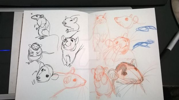 rat sketches 1 by alejandrodraws
