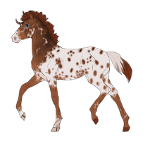 N2840 Padro Foal Design by casinuba