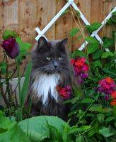 Loki Amongst The Wallflowers by Forestina-Fotos