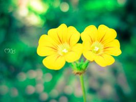 Golden Flowers by rjwarrier