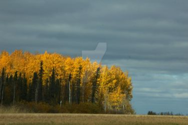 Yellow Trees by chiziwhiteafrican
