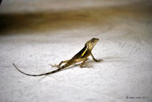 Lizard with a Golden Stripe by meihua