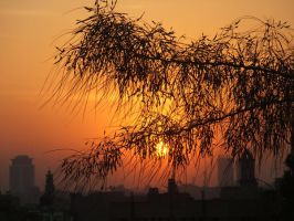 Tree branchs in sunset 5 by Magdyas