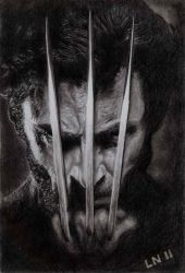 Wolverine by eugene23