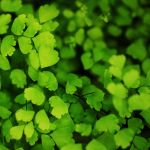 Tiny Green Life by pagit