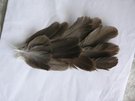 feather stock 1 -tail- by dark-dragon-stock