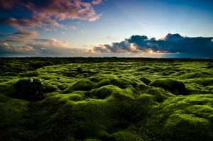 Moss-scape on Iceland by dannesyd