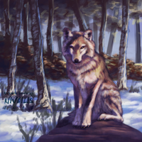 Winter Wolf by Lutri