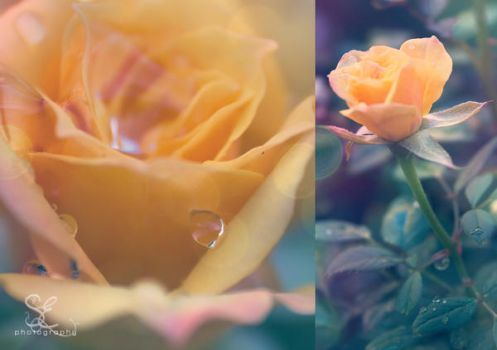 .after the rain. by multicolorlips