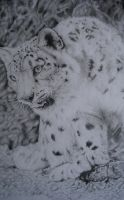 Snow Leopard by COla013