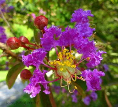 An Amazingly Sophisticated Purple Flower by Cloudwhisperer67