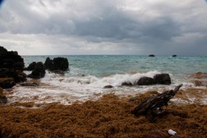 Bermuda 249 by FairieGoodMother