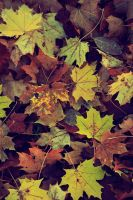 Colors Of Fall by Tingen