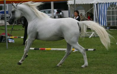 white cantering by Jello88