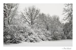 White memorys. by Phototubby