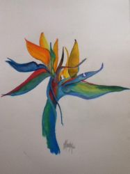 Bird of Paradise by Mousley