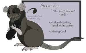 Scorpio Reference -Bf's Rat Fursona- by boxes-of-foxxes