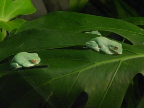 Green Frogs by MrGone2001