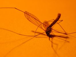mosquito 02 by tiffgraphic