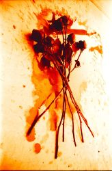 Drip the Red Roses by organic-angel