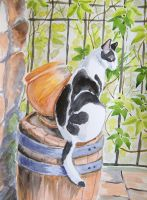 Patryk cat on a barrel - watercolor by gosia-jasklowska
