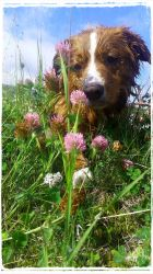 Pio-the toller by tonemalina