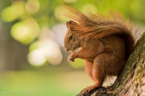 Squirrel in a city park by luxuss