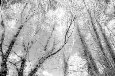 ghost trees by amyrhian