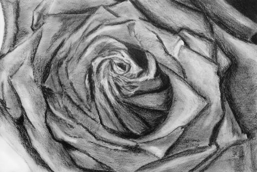 The Rose by MelGama
