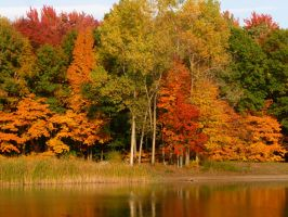 Fall Trees by 8bloodpetals