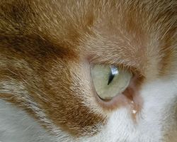 Cat's Eye 2 by BonsEYE