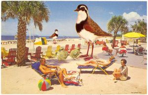 Florida, 1975 by ShaneGallagher