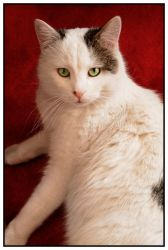 My cat Ben by Lilyas