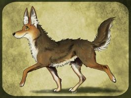 Coyote by fuzzypinkmonster