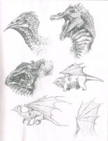 Dragon Sketches by RegalChaos