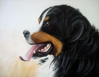Bernese Mountain Dog by toxicdesire