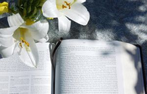 Stock Lily_Bible by Carol-Moore