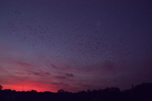 birds on the red sky by Tymeea